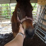 ARM investigator finds a horse in severe neglect