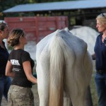rescued racehorse with ARM Investigator, TRAC  and ARMs vet