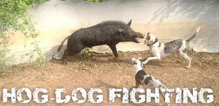 Hog Catch Dog Breeds