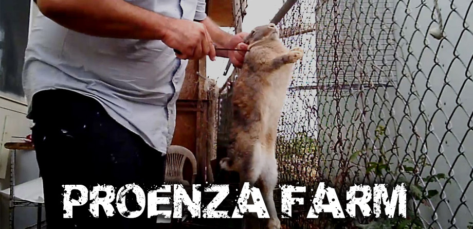 Proenza_cover