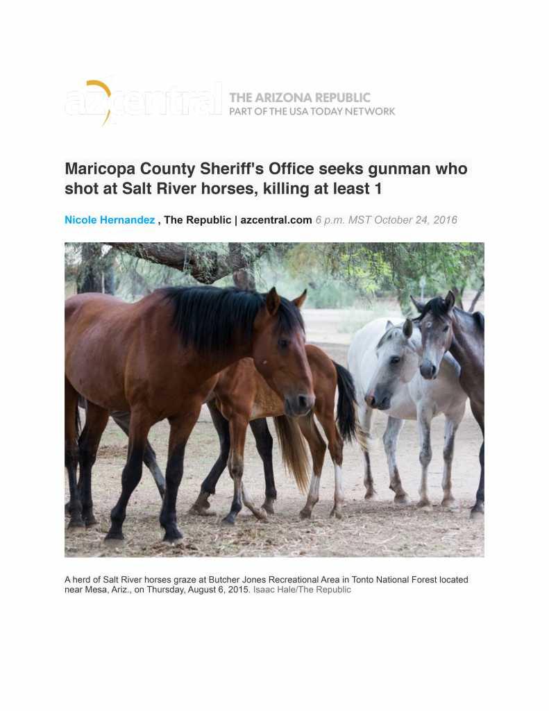 Salt River Wild Horses Killed