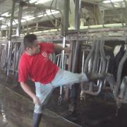 Larson Dairy Farm Florida