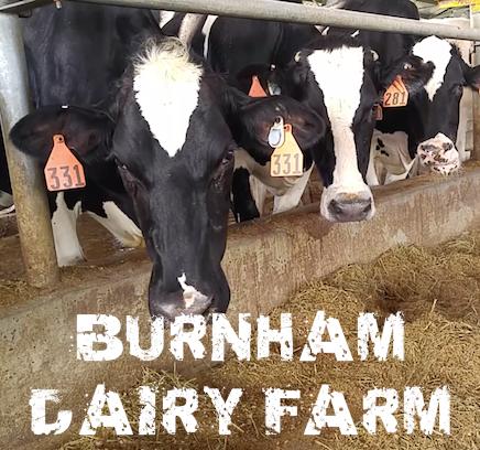 Burnham Dairy Farm
