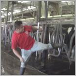 operation larson dairy farm