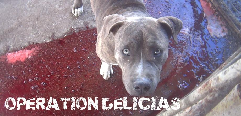 Operation Delicias